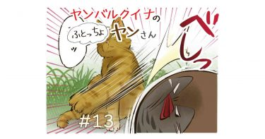 #13「ヤンさんVS野ネコ」